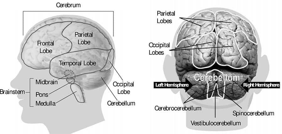 your brain on nofap