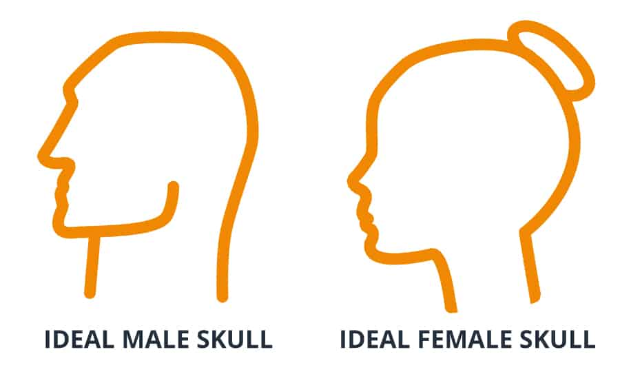 Ideal Skull Shape